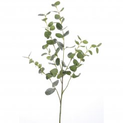 Eukalyptuszweig