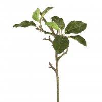 Zweig Apfelblätterzweig 186232
